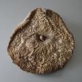 005MPB-Mushroom
